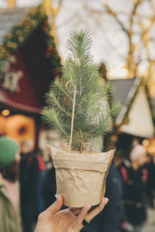 Hand holding a small tree on the Christmas Market - MFF002664