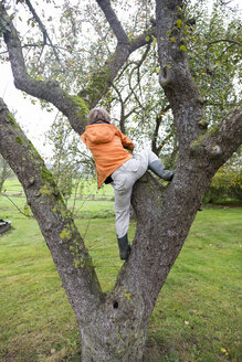 Boy climbing on a tree - TKF000427