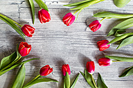 Tulips on wood - SARF002559