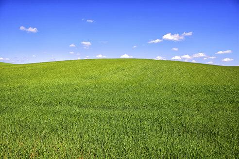 Spain, Castile-La Mancha, Cereal crop field in the countryside of Guadalajara - DSGF000904
