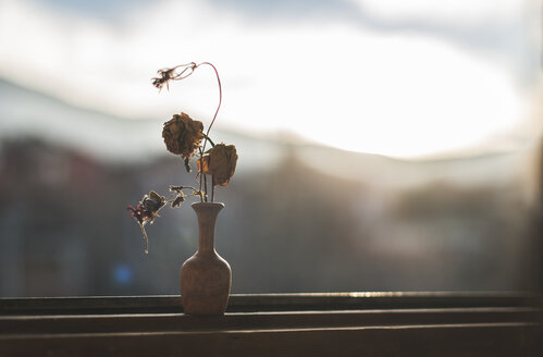 Withered flowers in a vase standing in front of windowpane - DEGF000617