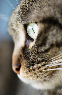 Face of tabby cat, close-up - RAEF000885