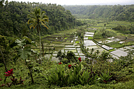Indonesia, Bali, landscape with rice field and jungle - DSGF000932