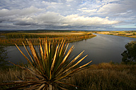 Spain, Valladolid Province, Nature Reserve Banks of Castronuno - DSGF000937