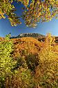 Spain, Asturias, Natural Park of Fuentes del Narcea, Degana and Ibias in autumn - DSGF000946