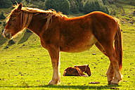 Spain, Asturias, two horses at Redes Natural Park - DSGF000952