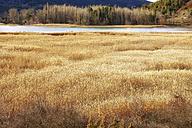 Spain, Cuenca Province, Serrania de Cuenca Natural Park, Una Lagoon - DSGF000980