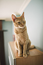 Portrait of winking tabby cat sitting on top of cabinet at home - RAEF000910