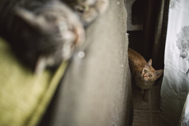 Tabby cat stalking other cat at home - RAEF000913