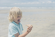 France, Brittany, Finistere, Pointe de la Torche, boy on the beach grimacing and holding crab - MJF001794