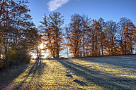 Germany, Bavaria, near Icking, Beech trees and morning mood - SIEF006979