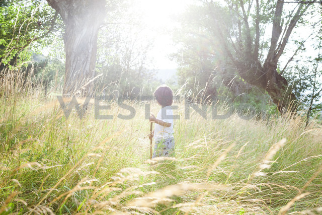 Little boy with wood stick standing on a meadow at backlight - VABF000240