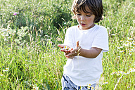 Portrait of little boy standing on a meadow with handful of daisies - VABF000243