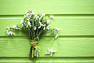 Bunch of snowdrops on brght green wood - MAEF011357