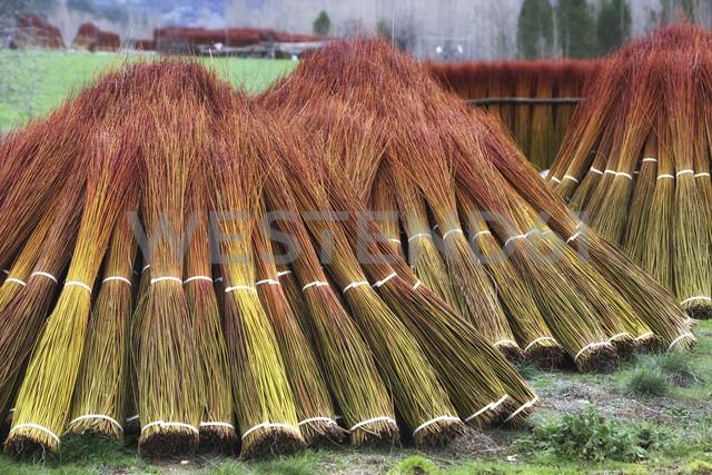 Spain, Cuenca, wicker harvest in Canamares in autumn - DSGF001014 - David Santiago Garcia/Westend61