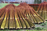 Spain, Cuenca, wicker harvest in Canamares in autumn - DSGF001014