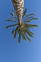 Spain, palm tree in front of blue sky seen from below - VIF000459