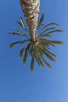 Spain, palm tree in front of blue sky seen from below - VIF000459