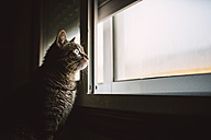 Tabby cat looking through the window - RAEF000917