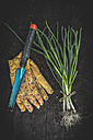 Bunch of spring onions, gardening gloves, gardening tool and soil on dark wood - DEGF000668
