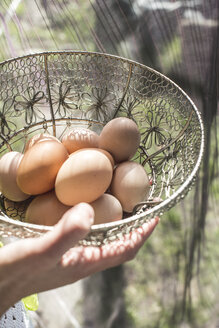 Woman's hand holding wire basket of brown eggs - DEGF000689