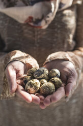 Woman's hands holding quail eggs, close-up - DEGF000692