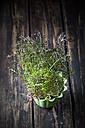 Flowerpot of wild turnip - CSF027283
