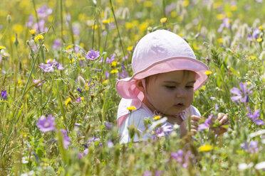 Baby girl sitting in flower meadow - DSF000635