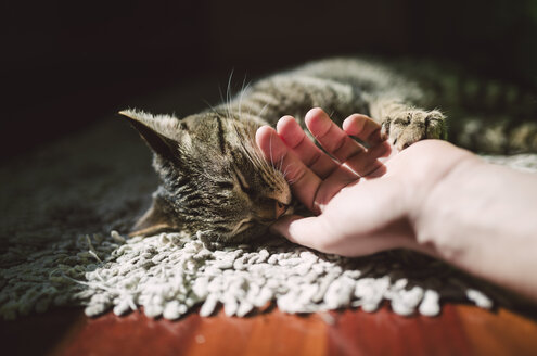 Man's hand stroking tabby cat - RAEF000940