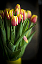 Bunch of tulips - MAEF011380