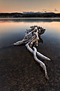 Spain, Soria, root in water of reservoir of La Cuerd la del Pozo - DSGF001110