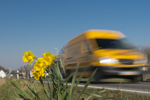 Van in motion passing daffodils at the roadside - FRF000399