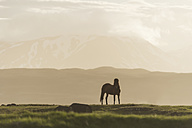 Iceland, Icelandic horse on meadow with volcanoes in background - PAF001721
