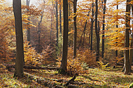 Germany, Rhineland Palatinate,  haze and sunshine in autumnal  Palatinate Forest - GWF004649