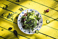Spring salad of baby spinach, herbs, arugula and lettuce, yellow wood - DEGF000719