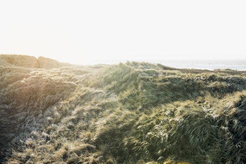 Denmark, Henne Strand, Dune landscape - BMA000155