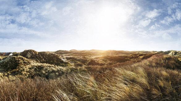 Denmark, Henne Strand, Dune landscape - BMA000206