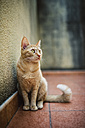 Cat sitting on a terrace - RAEF000961