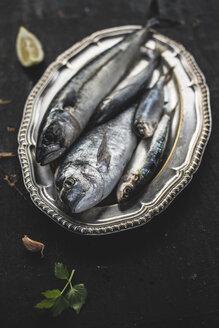Raw fish, sea bream, sea bass, mackerel and sardines - DEGF000780