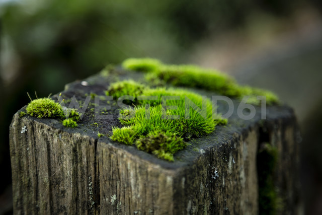 Moss on wooden stake - NGF000312 - Nadine Ginzel/Westend61