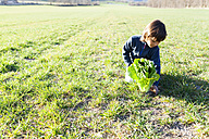 Boy with lettuce on field - VABF000409