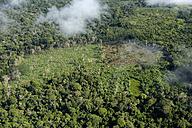 Brazil, Para, Itaituba, Amazon rainforest, slash and burn, reclamation of pastureland - FLKF000683