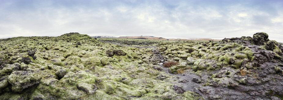 Iceland, mossy lava fields - EPF000049