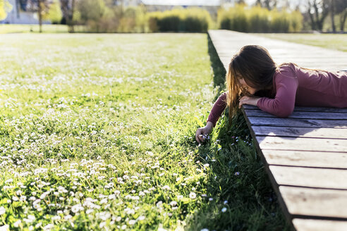 Girl lying on boardwalk picking daisies from a meadow - MGOF001708