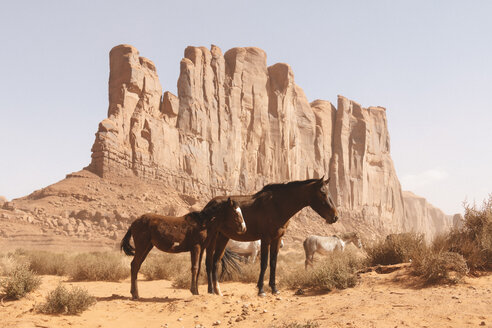 USA, Utah, Monument Valley, wild horses - GIOF000851