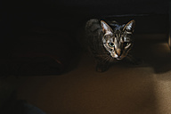 Portrait of starring tabby cat - KIJF000315