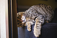 Portrait of playful tabby cat - KIJF000318