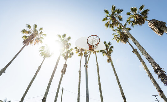 Outdoor basketball court surrounded by palm trees - LEF000109