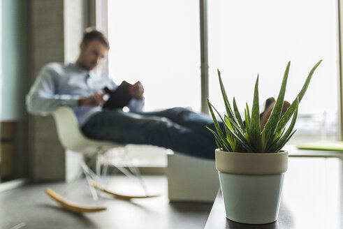Potted plant and young man in background using digital tablet - UUF006978