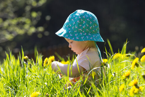 Baby girl wearing hat sitting on meadow picking dandelions - WWF003947